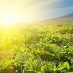vegetable-farm-under-sunlight-in-morning