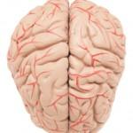 Brain Health - aProvenYou.com