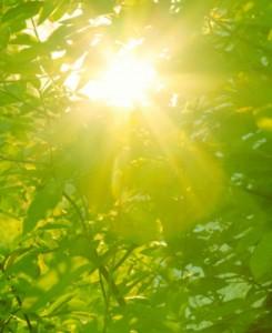 sunshine_leaves